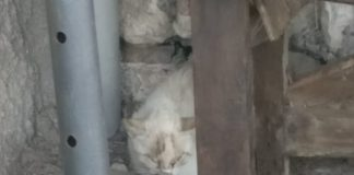 strage di gatti